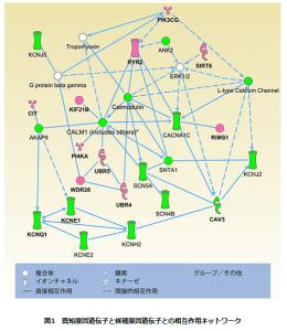 QT延長症候群の原因遺伝子候補を理研が発見